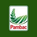PAMBAC S.A